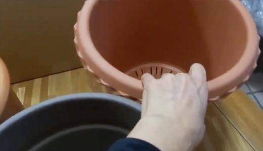 憧れの「テラコッタ」の鉢を買いました。(薔薇の鉢に)