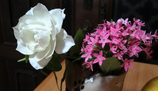 アイスバーグとピンクのペンタス