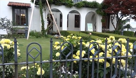 イングリッシュ・ローズ・ガーデン(港の見える丘公園)横浜 美しいバラの庭園