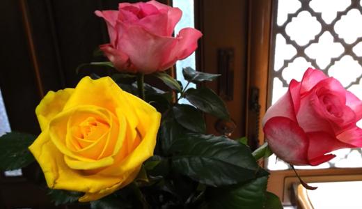 「令和はいつから?」てっきり4月1日だと・・・という勘違い、記念の薔薇
