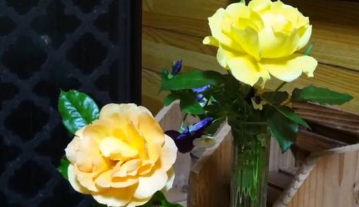 ミラノコレクション2015(パウダー)の可愛い天使&薔薇