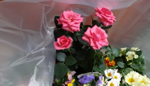 10月に買った花(ジュリアンやパンジー)&葉ボタンの種まき