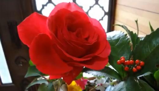 赤いバラ・ドフトボルケと千両の実