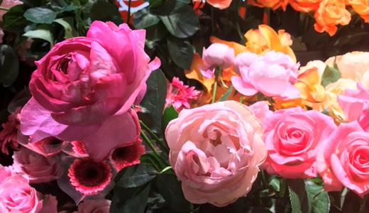香りの薔薇、イブピアッチェの切り花を買いました。(アプリコットファンデーションも)